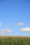 2麦地 免版税库存照片