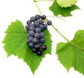 2黑色葡萄 免版税库存照片
