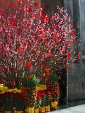 2 år för tree för kinespengar nya arkivfoton