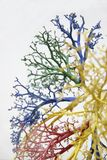2 żyły drzew obrazy royalty free