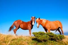 2 άλογα Στοκ εικόνα με δικαίωμα ελεύθερης χρήσης