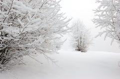 2 δέντρα χιονιού βουνών Στοκ Εικόνα