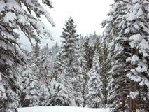 2 δασικός χιονώδης Στοκ Φωτογραφία