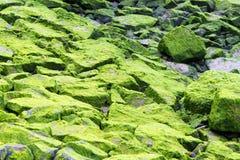 2 καλυμμένοι βράχοι βρύου Στοκ εικόνα με δικαίωμα ελεύθερης χρήσης