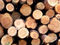 2 κορμοί δέντρων Στοκ Φωτογραφία
