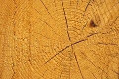 2 κόβουν το δέντρο Στοκ Εικόνα