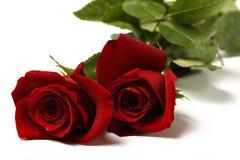 2 κόκκινα τριαντάφυλλα δύο Στοκ φωτογραφία με δικαίωμα ελεύθερης χρήσης