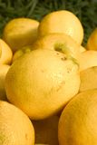2 λεμόνια Στοκ Εικόνα
