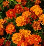 2 λουλούδια Στοκ Φωτογραφία