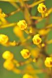 2 μακρο σειρές λουλουδιών Στοκ Εικόνες