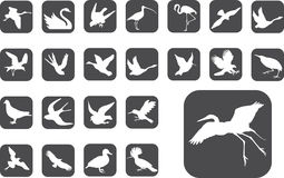 2 μεγάλα κουμπιά πουλιών π&omi Στοκ φωτογραφία με δικαίωμα ελεύθερης χρήσης
