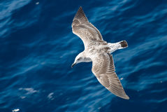 2 μικρό seagull Στοκ φωτογραφίες με δικαίωμα ελεύθερης χρήσης