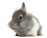 2 νεολαίες κουνελιών μηνώ Στοκ φωτογραφία με δικαίωμα ελεύθερης χρήσης