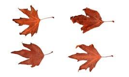 2 ξεραίνουν τα φύλλα Στοκ φωτογραφία με δικαίωμα ελεύθερης χρήσης