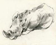 2 που σύρουν το ρινόκερο Στοκ φωτογραφία με δικαίωμα ελεύθερης χρήσης