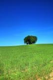 2 πράσινα δέντρα χλόης πεδίων δεσμών Στοκ εικόνες με δικαίωμα ελεύθερης χρήσης