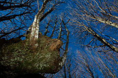 2 πόδια δασών Στοκ εικόνες με δικαίωμα ελεύθερης χρήσης