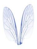 2 φτερά Στοκ εικόνες με δικαίωμα ελεύθερης χρήσης