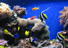 2 ψάρια Στοκ Εικόνα