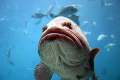 2 ψάρια Στοκ εικόνα με δικαίωμα ελεύθερης χρήσης