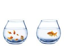 2 аквариума от рыб Стоковые Изображения RF