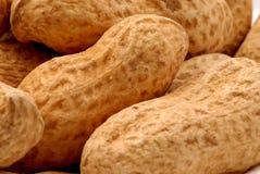 2 арахиса Стоковое фото RF