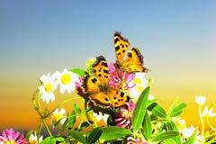 2 бабочки на camomiles Стоковые Фото