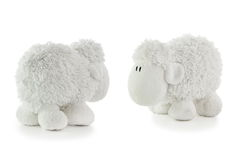 2 белых овечки Стоковое Изображение RF