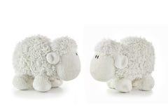 2 белых овечки Стоковое фото RF