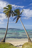 2 вала кокоса Стоковое Фото