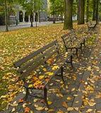 2 вдоль стендов понижаются парк листьев Стоковое Изображение RF