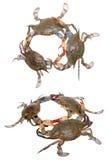 2 взгляда раков Стоковые Фотографии RF