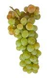 2 виноградины Стоковые Фотографии RF