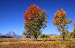 2 высокорослых вала осени Стоковая Фотография