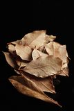 2 высушенные заливами листья травы Стоковые Фото