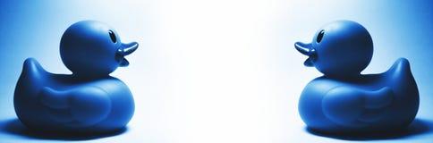 2 голубых резиновых утки Стоковые Фотографии RF