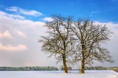 2 дерева в ландшафте зимы Стоковая Фотография RF