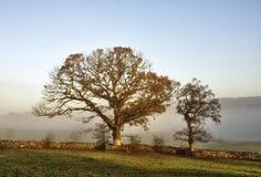 2 дерева в тумане утра. Стоковая Фотография RF
