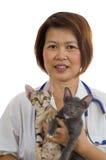 2 держа котят зооветеринарного Стоковое Изображение RF