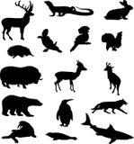 2 животного Стоковые Изображения