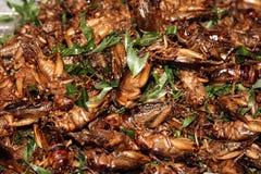2 зажаренный саранчук Стоковое Изображение