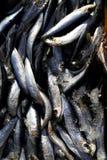 2 замерли рыбы, котор Стоковые Фото