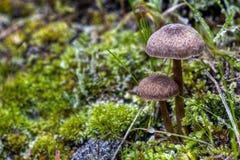 2 замороженных гриба Стоковое Изображение RF