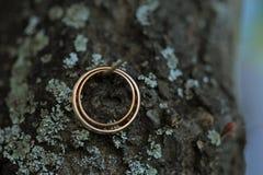 2 золотистых кольца на ветви Стоковое Изображение