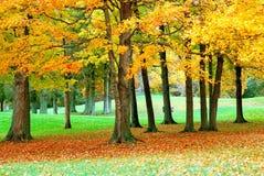 2 золотистых листь Стоковые Изображения