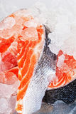2 коль от семги Стоковая Фотография RF