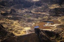 2 кондора colca самонаводят valey террасы inca Стоковые Фотографии RF