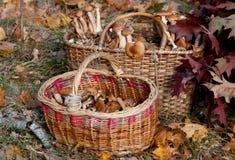 2 корзины грибов Стоковое фото RF