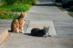 2 кота, один серый цвет один, красный цвет имбиря, друзья сидя совместно на тропе смотря в таком же направлении стоковое фото rf