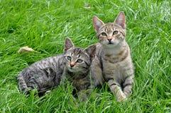 2 котят на траве Стоковое фото RF